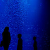 Globe/Roger Nomer<br /> Visitors view a circular column of swirling fish, known as a bait ball, on Tuesday at the Wonders of Wildlife National Museum and Aquarium.