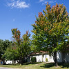 Trees on East 26th Street give a preview of Fall colors that will soon appear.<br /> Globe | Laurie Sisk