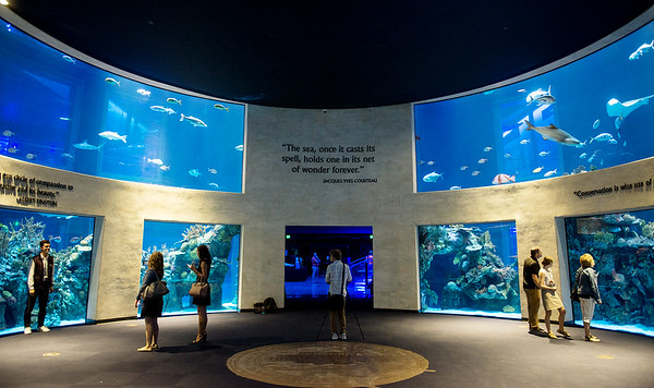 Aquatic tanks greet visitors on Tuesday at the Wonders of Wildlife National Museum and Aquarium.
