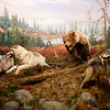 An exhibit showcases a grizzly bear on Tuesday at the Wonders of Wildlife National Museum and Aquarium.