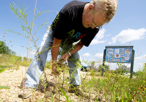Randal Switzer of the Chert Glades Chapter of Missouri Master Naturlaists, clears invasive plants in preparation for the planting of pollinator-friendly plants at the Wildcat Glades trailhead near Redings Mill Bridge on Friday. <br /> Globe | Laurie Sisk