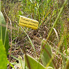 Labels mark pollinator-friendly plants at the Wildcat Glades trailhead near Redings Mill Bridge on Friday. <br /> Globe | Laurie Sisk