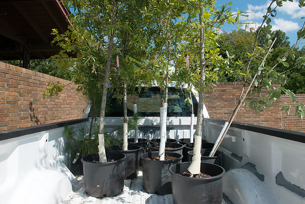 Various trees will be planted at Carver National Monument on Saturday.<br /> Globe   Roger Nomer