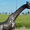 """Standing Giraffes"" is one of several sculptures in the Rotary Sculpture Garden at Mercy Park.<br /> Globe 