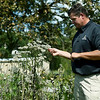 Kevin Badgley, manager of the Shoal Creek Conservation Education Center, stands next to a boneset plant, which is used to attract monarch butterflies at the Moanarch Way Station at the center. The station also contains plenty of milkweed and nectar flowers to attract the migrating monarch.<br /> Globe | Laurie Sisk