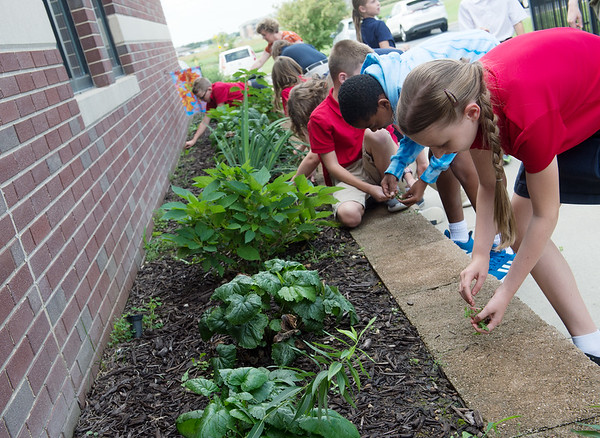 St. Mary's Elementary fourth graders, including Ellie Bohachick, right, work in the school's butterfly garden on Wednesday.<br /> Globe   Roger Nomer