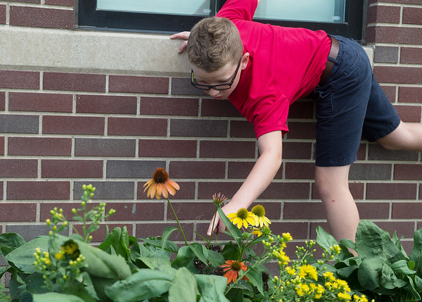 Lucas Nangle, fourth grader at St. Mary's Elementary, works in the school's butterfly garden on Wednesday.<br /> Globe | Roger Nomer