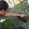 Kiki Thom, an eighth grader at South Middle School, pets a chicken during Thursday's Ag Day at Joplin High School.<br /> Globe | Roger Nomer