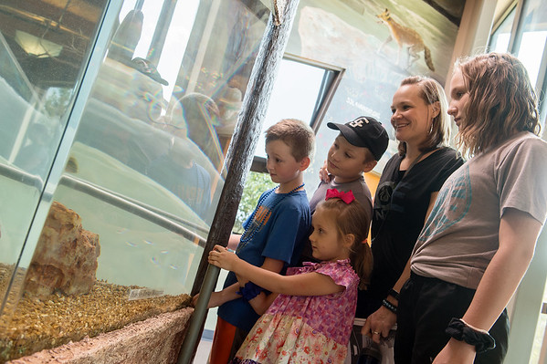 (from left) Matthew, 10, Melody, 4, Judah, 9, Melisha and Lydia, 12, Meredith look at the aquarium during the Shoal Creek Conservation Education Center open house on Friday.<br /> Globe | Roger Nomer