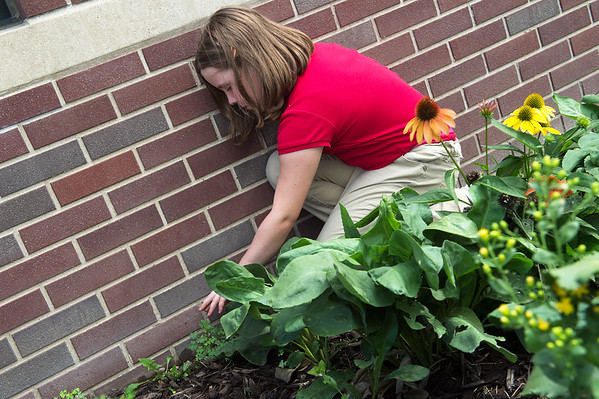 Claire Gould, fourth grader at St. Mary's Elementary, works in the school's butterfly garden on Wednesday.<br /> Globe | Roger Nomer