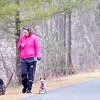 BEN GARVER — THE BERKSHIRE EAGLE<br /> Theresa Apple walks her dogs on the Ashuwillticook Rail Trail in Lanesborough, Monday, January 13, 2020. Warm weather and a lack of snow makes the trail unusually inviting.