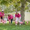 Pink Out Putnam plant a flock of pink flamingoes outside the home of Dr. Ananad Kuruvilla where they will stand for October which is breast cancer awareness month. Fran Ruchalski/Palatka Daily News