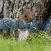 A squirrel enjoys an afternoon snack by a tree at the riverfront in Palatka. Fran Ruchalski/Palatka Daily News