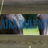 A pair of young mules peer through the fence out onto Springside Shortcut Road on Thursday morning. Fran Ruchalski/Palatka Daily News