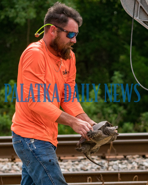 Along came good samaritan Ray Crisp to lend a hand. Mindful of the danger, he carefully picked up the turtle who was snapping away at him. Crisp moved him to the other side of the road, and even when he was putting him down, the turtle tried to bite his foot. But after all that, the turtle went on his merry way in the brush along the railroad tracks. Fran Ruchalski/Palatka Daily News