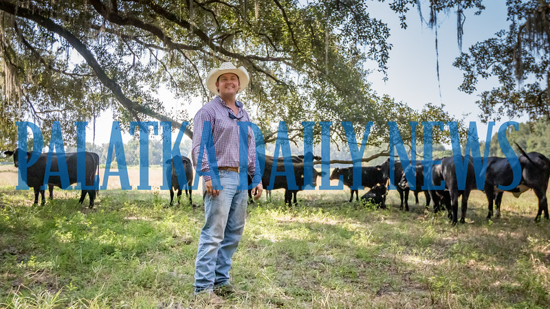 Chance Clay stands out with some of his cattle in one of their fields. Fran Ruchalski/Palatka Daily News