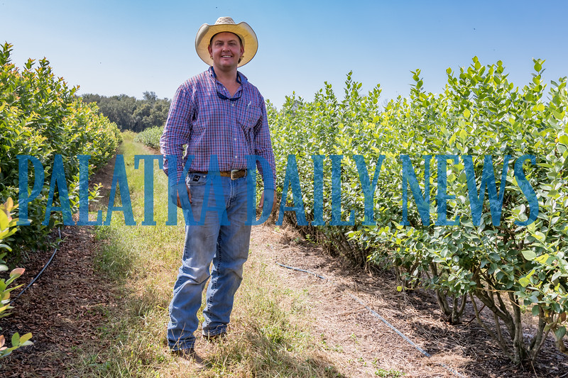 Chance Clay stands with some his blueberry plants on their 20 acres of bushes for u-pick and commercial markets. Fran Ruchalski/Palatka Daily News