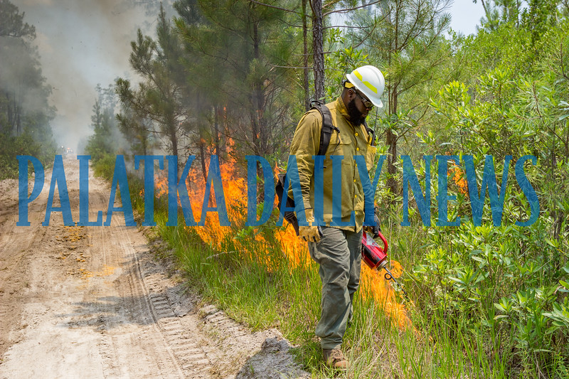 Anthony Walters starts a back burn along forest road 74/77 to consume what would be fuel for the main fire so that it does not leave the containment area. Fran Ruchalski/Palatka Daily News