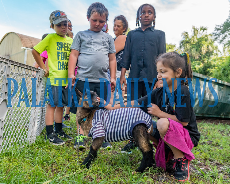 FFA students at Jenkins Middle School held an ag day at their farm for students from James A. Long Elementary School on Monday. At this station the students got up close with some of the Nigerian Dwarf  Goat herd. This baby is being bottle-fed and wears a onesie and a disposable diaper. Fran Ruchalski/Palatka Daily News