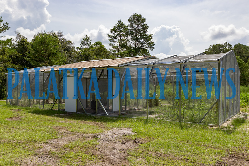 The Florida Grasshopper Sparrows are housed in this aviary on the Welaka Fish Hatchery. Fran Ruchalski/Palatka Daily News