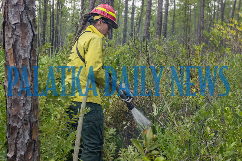 Wildlife biologist Liz Ramirez douses a patch of fire in the non-wilderness area that crossed the forest road from the contained fire area. The fire crews are working to make sure this doesn't happen and they're quick to put these fires out when they occur. Fran Ruchalski/Palatka Daily News