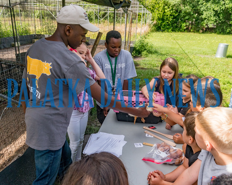 FFA students at Jenkins Middle School held an ag day at their farm for students from James A. Long Elementary School on Monday. At this station the students were able to pet this duckling along with chickens and rabbits. Fran Ruchalski/Palatka Daily News