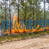 The back burn started along forest road 74/77 to consume what would be fuel for the main fire so that it does not leave the containment area. Fran Ruchalski/Palatka Daily News