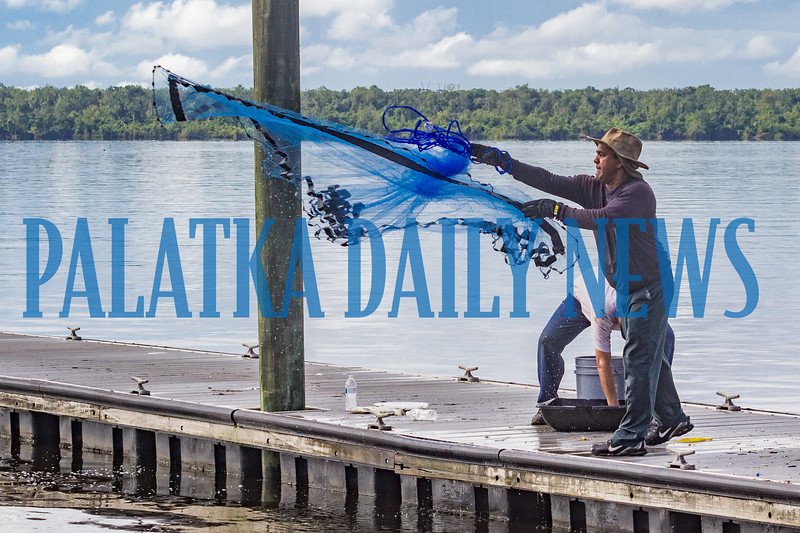 Hemchand Sankar throws a net out to catch shrimp at the St. Johns Riverfront by the bridge on Thursday morning whie his partner Hem Singh separates the shrimp they already caught. Fran Ruchalski/Palatka Daily News