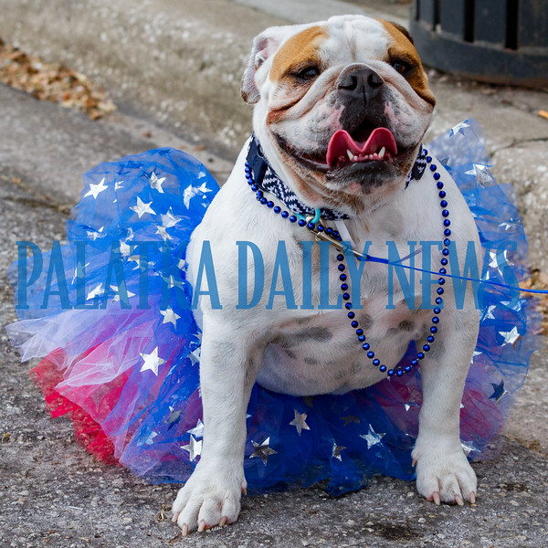 Baylee attended the Memorial Day parade in her finest patriotic tutu. Fran Ruchalski/Palatka Daily News