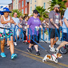 This little guy was warning some of the other 5K walkers that he was raring to go. Fran Ruchalski/Palatka Daily News