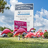 A flock of Pink Out Putnam pink flamingoes stand outside the office of Dr. Ananad Kuruvilla where they will stand for October which is breast cancer awareness month. Fran Ruchalski/Palatka Daily News