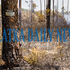 That small sign on the tree designates that the Little Lake George Wildlife Area is a national forest wilderness. Because of that, firefighters are not permitted to use mechanical apparatus to deal with the fire. It is up to Mother Nature to deal with it. Their job is to contain it and prevent it from spreading to non-wilderness areas. Fran Ruchalski/Palatka Daily News