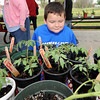 Ian Wells, 7, checks out tomato plants at the CJ Cultivators Garden Club plant sale on Saturday in Carl Junction. Organizers said about 1,000 plants were sold on Saturday, with proceeds going to community beautification projects and two college scholarships.<br /> Globe | Laurie Sisk