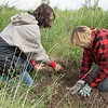 Sheri Daniels, conservation programs coordinator with the Upper Niobrara White Natural Resource District, left, and Chadron Middle School student Brianna Larsen plant a chokecherry donated by the UNWNRD near Eagle Ridge May 22, 2017. (Photo by Tena L. Cook/Chadron State College)