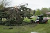 High winds and a structural weakness caused by included bark combined to down a large spruce tree west of Crites Hall early Monday, May 15, 2017. (Photo by Tena L. Cook/Chadron State College)