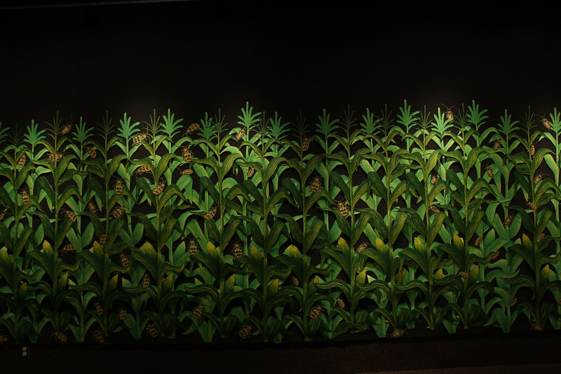 """Zea Mays,"" a 2014 woodcut by Sam Cikauskas spans the entire width of Memorial Hall's Main Gallery. It is part of his exhibit, commenting on America's food supply, on display Sept. 21-Oct.9."