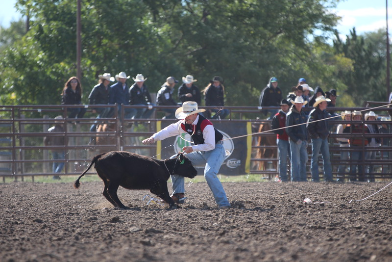 Chadron State College cowboy Lane Day in the tie down roping event at the CSC Rodeo Sept. 18, 2016. (Tena L. Cook/Chadron State College)