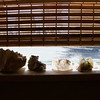 ELODIE REED - FOR THE BERKSHIRE EAGLE Rocks and minerals line the windowsills in Larry Michon's CPA office in North Adams.