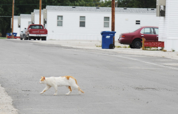 Globe/T. Rob Brown<br /> A cat walks across a less-populated street in the FEMA mobile home park near the Joplin Regional Airport, Tuesday afternoon, Oct. 9, 2012.