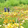 KRISTOPHER RADDER — BRATTLEBORO REFORMER<br /> Steve Janiak and Reed Wold, of Boston, look through different types of lilies at Olallie Daylily Gardens, in South Newfane, on Saturday, July 27, 2019.