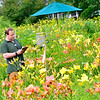 KRISTOPHER RADDER — BRATTLEBORO REFORMER<br /> Steve Janiak, of Boston, makes notes of different types of lilies at Olallie Daylily Gardens, in South Newfane, on Saturday, July 27, 2019.