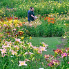 KRISTOPHER RADDER — BRATTLEBORO REFORMER<br /> Bright colors from different lilies fill the field at Olallie Daylily Gardens, in South Newfane, on Saturday, July 27, 2019.