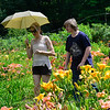 KRISTOPHER RADDER — BRATTLEBORO REFORMER<br /> Christine Goepp, Amy St. Clair and Quillan Carptener look for the perfect lily at Olallie Daylily Gardens, in South Newfane, on Saturday, July 27, 2019.