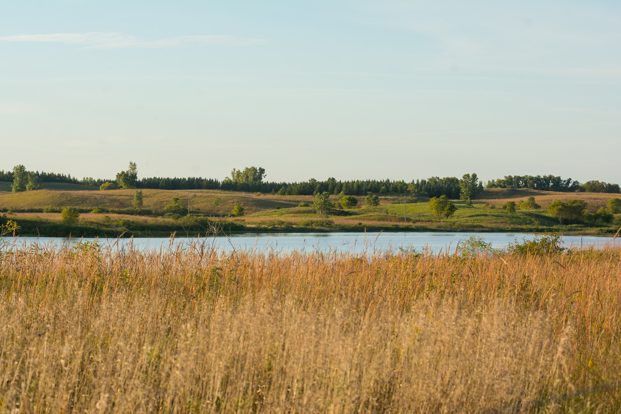 "A healthy aquatic ecosystem is especially important to waterfowl production areas like this one located right next to the Berge property.  The numerous pothole lakes in the Glacial Lakes Prairie Core Area support the state waterfowl hunting economy.  According to a 2006 U.S. Fish and Wildlife Service National Survey (link to article below), 52,000 waterfowl hunters in Minnesota spent more than $28 million on trip and equipment expenditures. The industry created 653 jobs and had a total economic impact of $43.1 million.   Good conservation practices from farmers in this region are vital to maintaining habitat for wild game and the local economy.<br /> <br /> ( <a href=""http://www.fws.gov/midwest/News/Release09-18.html"">http://www.fws.gov/midwest/News/Release09-18.html</a>)"