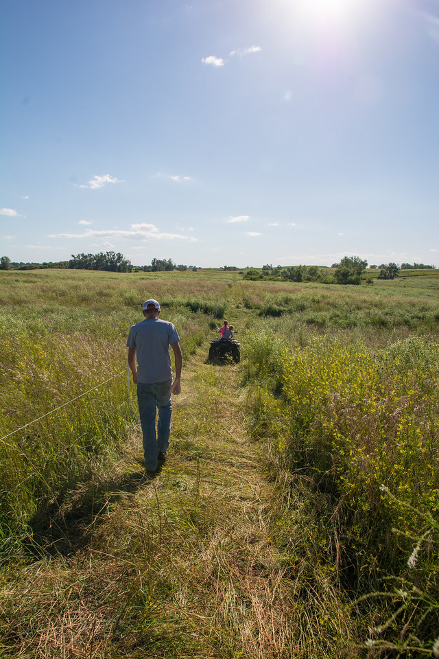 Jess began educating himself about sustainable alternative grazing methods that would support small operations like his.  Eventually, the Berges found the Minnesota Land Trust, and together, they entered the land into a conservation easement and developed a permanent conservation grazing plan.