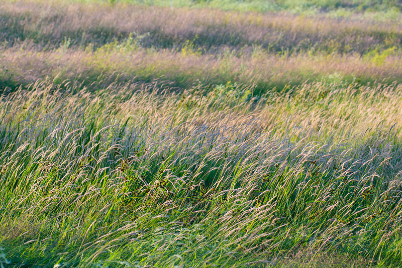 Maintaining prairie and wetland habitats in Minnesota is extremely important.  A functional prairie landscape has the capacity to adapt to changing environmental conditions and support sustainable populations of fish, wildlife and native plants, as well as compatible economic uses.  The Minnesota Prairie Conservation Plan calls for three approaches to conservation in the Prairie Region: maintain a minimum of 40% grassland and 20% wetland in cores areas, establish habitat corridors to connect core areas with grassland/wetland complexes, and maintain 10% grassland/wetland habitats outside the core areas in the Prairie Region.