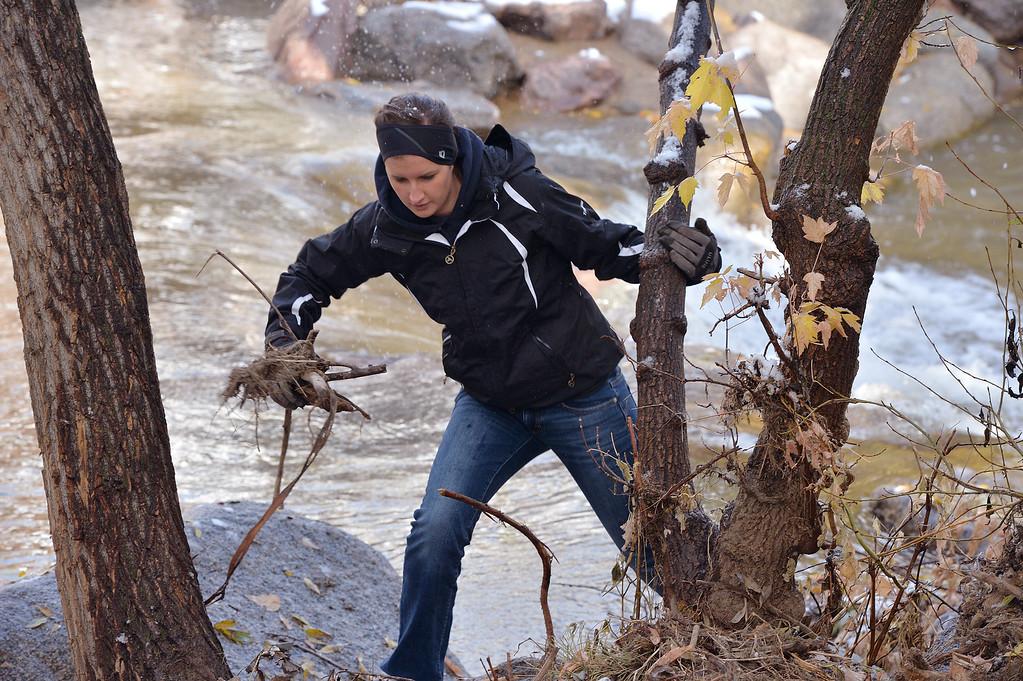 . Tori Riches picks up debris from Boulder Creek on Friday.  Over 200 volunteers helped clean up flood damage to  Eben G. Fine Park and Boulder Creek on Friday. October 18, 2013 Staff photo/ David R. Jennings