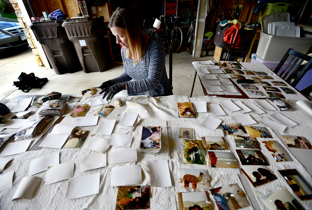 . Heather Knierim carefully moves photos that were damaged in September\'s floods while trying to clean them up at her home in Boulder, Colorado October 9, 2013. Heather Knierim, Meg Blum and Diana Ewing have been helping clean up photos for people who were hit hard by the flooding. BOULDER DAILY CAMERA/ Mark Leffingwell