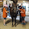 HALEY WARD | THE GOSHEN NEWS <br /> Laura Elliott and Alyssa Batton groom a horse and Cait Wilson, equine manager, helps during ADEC's summer camp on Friday at Loveway, Inc. The campers rode on a horse-drawn cart, participated in a scavenger hunt, lassoed cattle and groomed horses.
