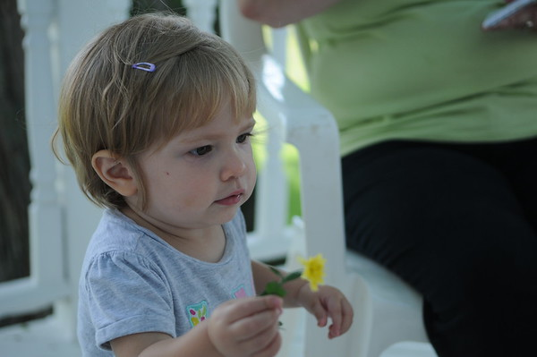 HALEY WARD | THE GOSHEN NEWS<br /> Hazel Eash, 18 months, picks flowers from her grandma's mums Thursday at their Middlebury farm. When she gets older, they hope to have her join 4-H.